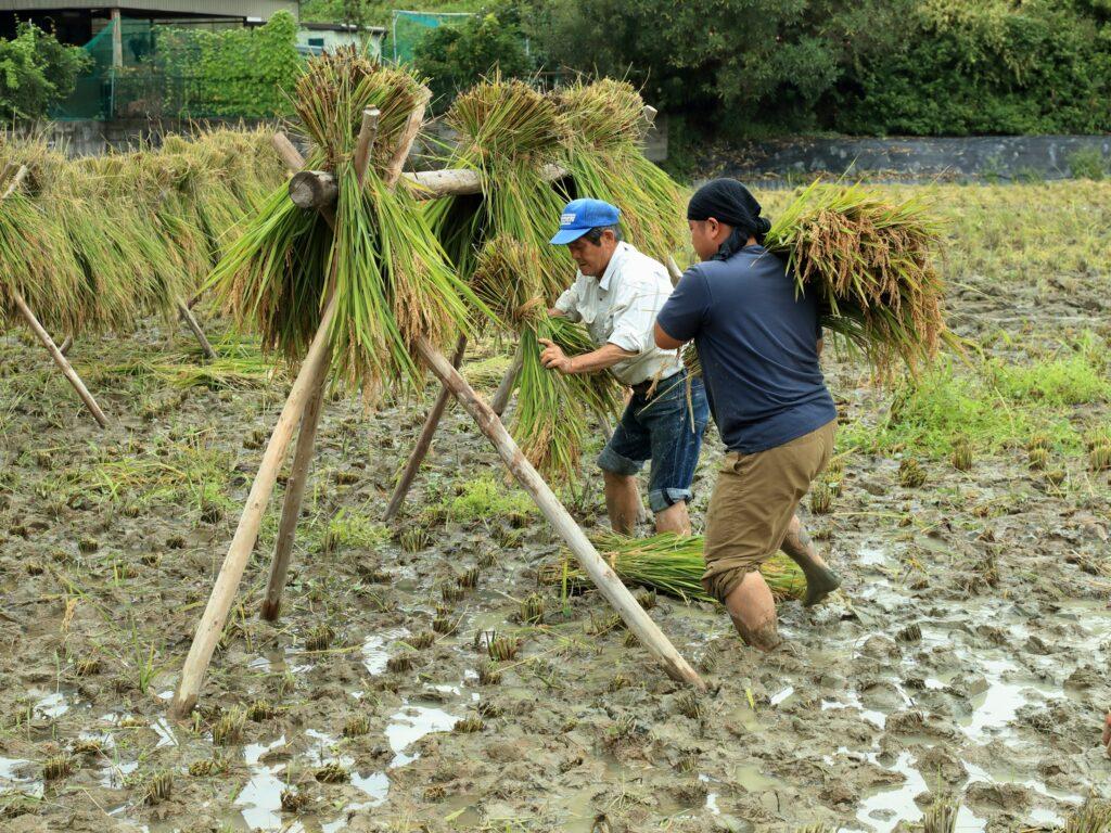 1 川島悟郎 懐かしい農作業